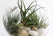 Garden: Indoor plants / by Barely Poppins