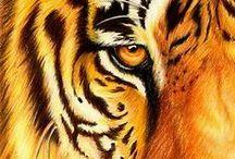 Tigers / by Melissa Earnest