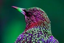 Birds / Everything to do with birds. bird accessories and clothing, bird t-shirts, funny pictures and quotes, exotic birds, garden birds and bird watching, if its to do with birds here is where you will find it.