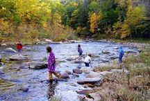 Citizen Scientist Opportunities in Western MA / by Hilltown Families