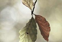 ★ h e r f s t / Moois van de herfst