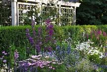 Gardening / by Sue Green