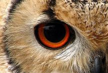 Clever Owls! / by All Reiki'd Up