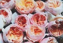Pastel / colors,romantic