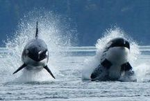 Dolphins & Whales / by Ann Mccarron