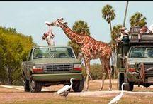 Giraffes / by Ann Mccarron