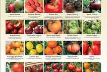Tomato Gardening / Grow your own tomatoes and enjoy fresh produce all summer long!