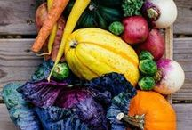 Garden Fresh Recipes / Easy recipes that include key ingredients right from your back yard garden.