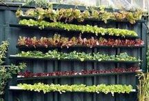 Small Space & Urban Gardening / Inspiration and solutions for small-space, urban gardeners.