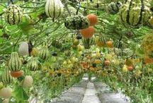 Vegetable Gardening / Tips for a bountiful vegetable garden.