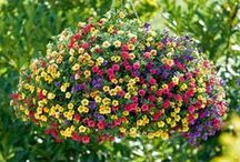 Hanging Baskets 101 / Let us help you take some of the mystery out of planting and maintaining beautiful hanging baskets using our coco liners and baskets!
