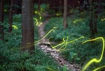 Mother Nature / by Shawn Stehlik-Merkel