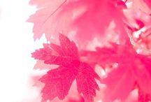 Fall Backward