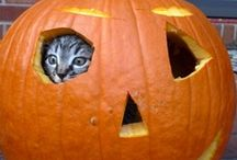 ☆ Halloween for Pets ☆  / by Vedante { Barbara Kantor }