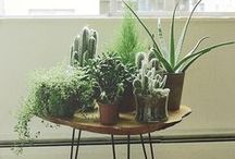 green // / one day I will find my green thumb and all my plants will live. #hopeful