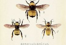 BEES! / Beekeeping and bee friendly environments / by Andrea Strawther