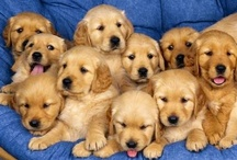 Puppies - All / Dogs are miracles with paws