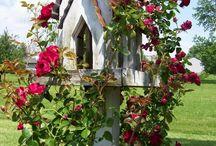 Patio-Backyard-Plants ect . . . / by Misty Shaw