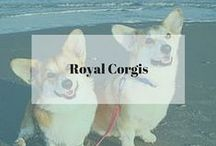 Royal Corgis / Always want to save photos of cute pups when I see them on the web but didn't know where to save them till now.  Missing my three corgis so much - Starbucks, Kona, and Latte.
