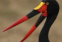 Birdies / by Ranjini Thomas