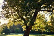Trees / by Ranjini Thomas