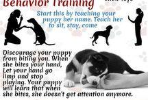 Puppies - Training / Puppies - Training