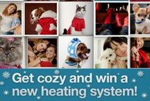 Cozy Photo Contest Entries / Select entries from our Cozy Photo Contest, enter to win a new furnace! Post up to five entries on our facebook timeline now at http://www.facebook.com/ServiceExpertsHeatingandAirConditioning / by Service Experts