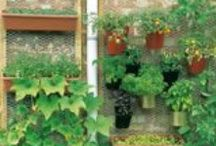 GreenThumb / Tips for growing herbs, fruit, vegetables and decorative plants - indoors and out / by Lisa Weaver