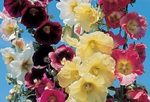 Flowers / by Barbara Rehbock