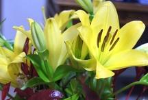 Flowers / by Kell @ All Mum Said
