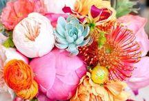 Flowers / by Keri Fitzgerald