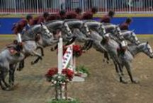 Horses: Jumping / by Anne Pidek