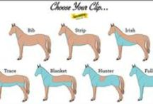 Horse Care / Information about caring for horses!
