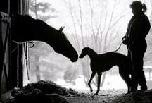 Horses and Friends / by Anne Pidek
