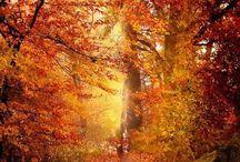 Autumn / by Suzanne McGuire