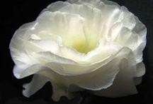 flowers / flowers / by Kimberly Keller