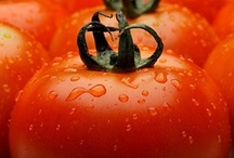 food / i love tomato!