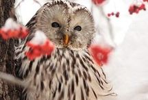 You're a HOOT! ☺ / by Kami Stewart