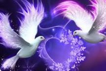 DOVES / by Donna O'Connor