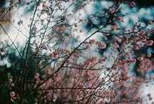 :: spring ::