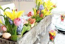 Spring has Sprung! / by Sadie Donaldson