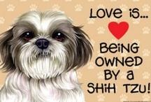 Animals! Love / by Bethany Jackson