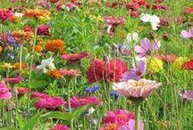 Flowers / by Elisa Economy-Morgan