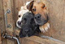 Doggies / by Elisa Economy-Morgan