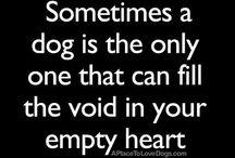 Dogs / Best friend