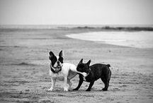 Pooches / by Danielle Pavao