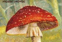 Vintage Mushroom Postcards / by Maria Krueger