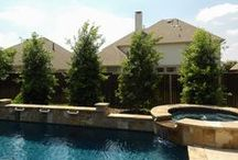Best Trees & Shrubs for Pools / We have a nice offering of trees and large shrubs at Treeland that we recommend for near pools and other outdoor areas. You will not see any things like crape myrtles here as they drop way too many flowers into the pool. Checkout the images below and click on the images to learn more about them and to see additional images. All are approved for North Texas.