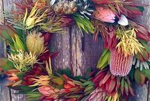 Australian Flora. / Electronic hoarding about our natural world....also hoping for some ideas for the garden!!