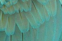 Turquoise inspiration / The color turquoise